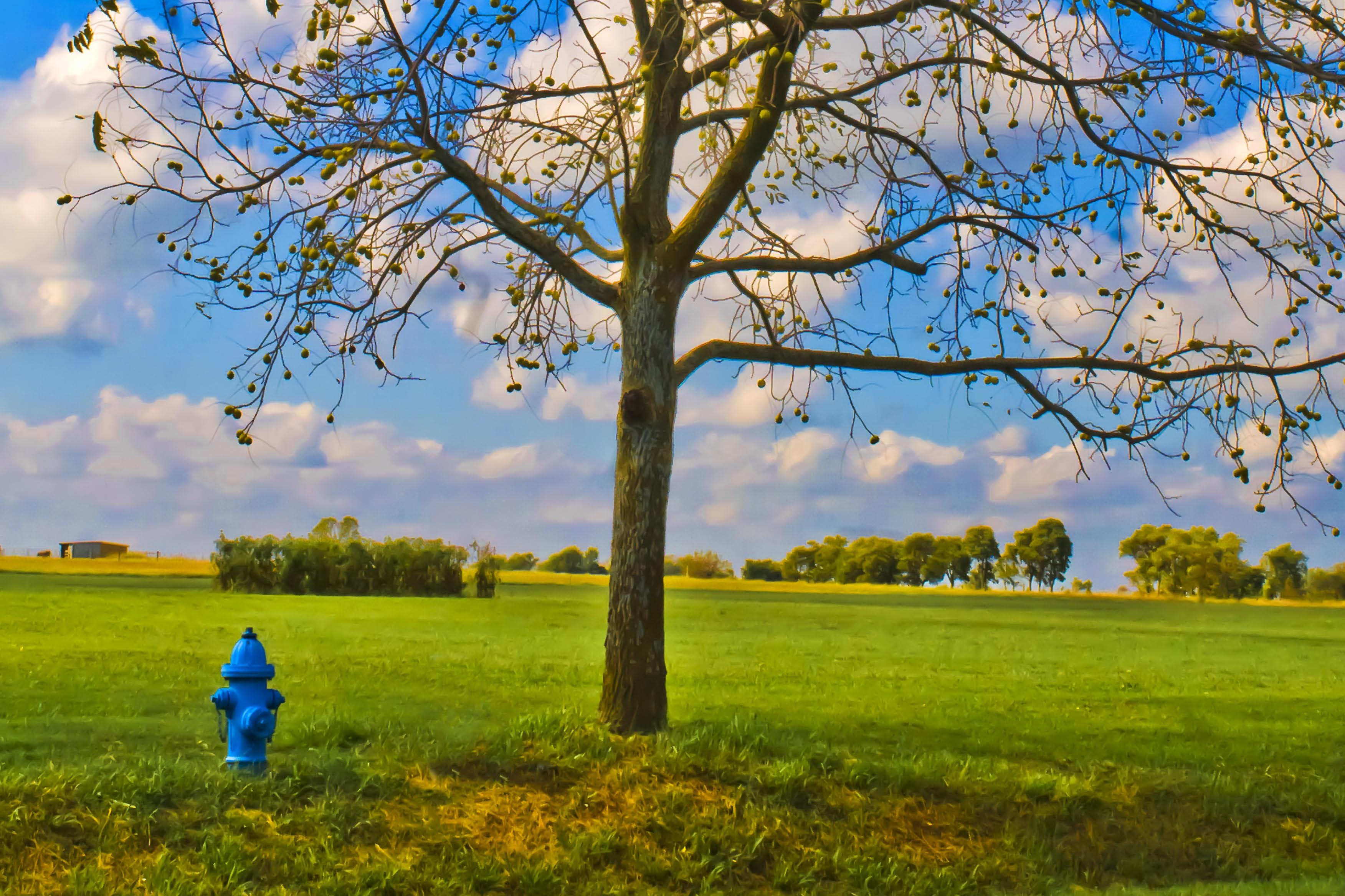 Under the Walnut Tree by Carol von Canon on Flickr (https://www.flickr.com/photos/biggreymare/10271272255)